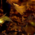 dzn_An-Almost-Ephimeral-Autumn-by-Luzinterruptus-2