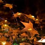 dzn_An-Almost-Ephimeral-Autumn-by-Luzinterruptus-3