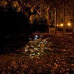 dzn_An-Almost-Ephimeral-Autumn-by-Luzinterruptus-7